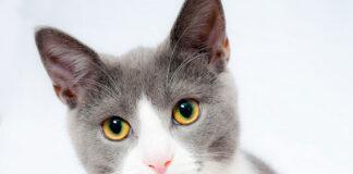 Jakie mleko powinno się podawać kotom